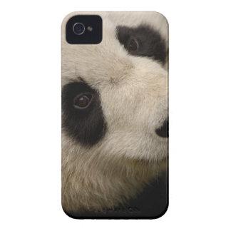 Familia de la panda gigante (melanoleuca del Case-Mate iPhone 4 carcasa
