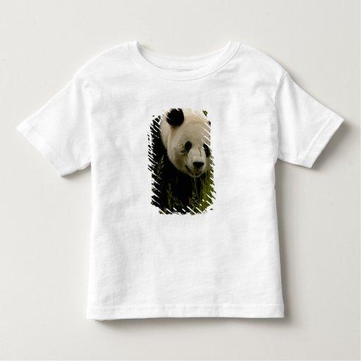 Familia de la panda gigante (melanoleuca del tee shirt