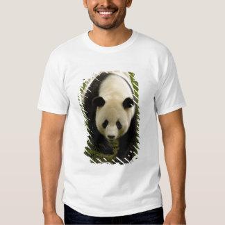 Familia de la panda gigante (melanoleuca del polera