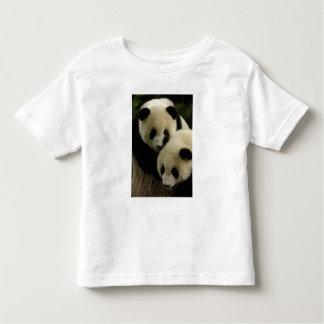 Familia de la panda gigante (melanoleuca del remera