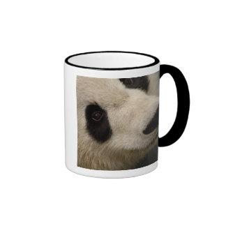 Familia de la panda gigante (melanoleuca del taza de dos colores