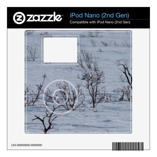 Familia de la perdiz nival iPod nano skins
