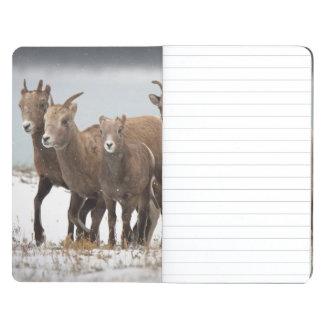 Familia de las ovejas de montaña cuaderno grapado