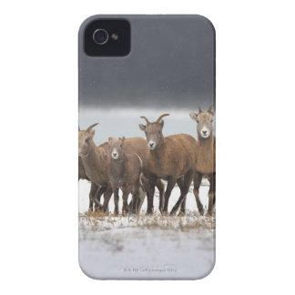 Familia de las ovejas de montaña Case-Mate iPhone 4 funda