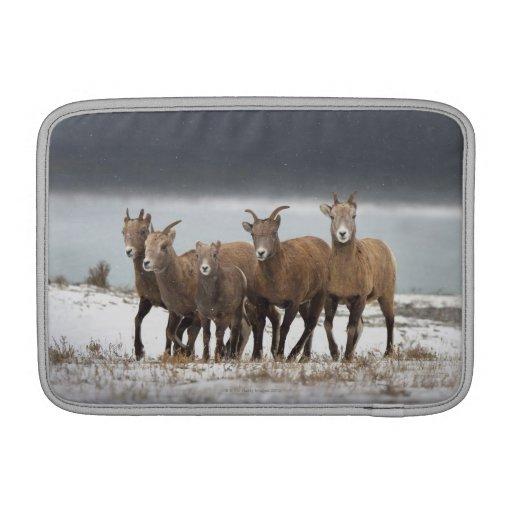 Familia de las ovejas de montaña fundas para macbook air