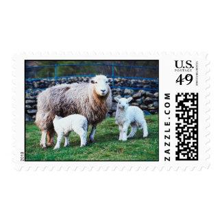 Familia de las ovejas estampillas