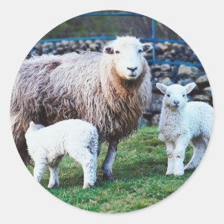 Familia de las ovejas pegatina redonda