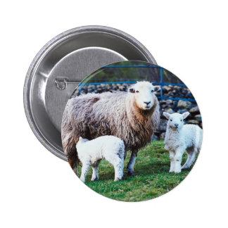 Familia de las ovejas pin redondo 5 cm