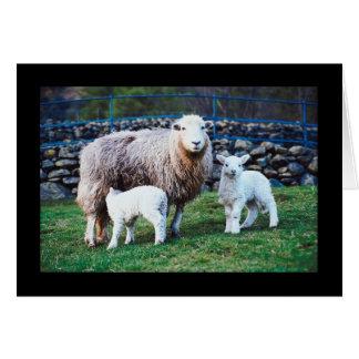 Familia de las ovejas tarjeta de felicitación