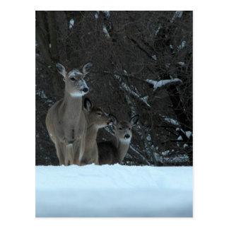 Familia de los ciervos tarjetas postales