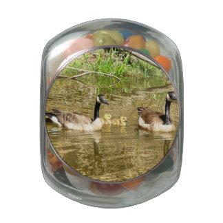 Familia de los gansos de Canadá Jarrones De Cristal