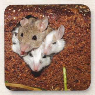 Familia de los ratones posavasos de bebida