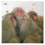 Familia de macaque japonés, Jigokudani, Tejas Ceramicas