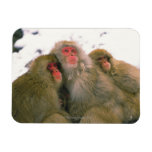 Familia de macaque japonés, Jigokudani, Imanes Rectangulares
