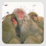Familia de macaque japonés, Jigokudani, Calcomanía Cuadradas Personalizadas