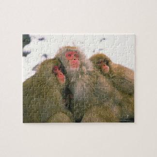 Familia de macaque japonés, Jigokudani, Rompecabeza Con Fotos