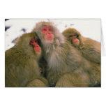 Familia de macaque japonés, Jigokudani, Tarjetas