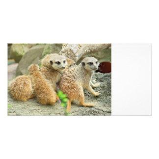 Familia de meerkats - tarjeta de la foto tarjetas con fotos personalizadas