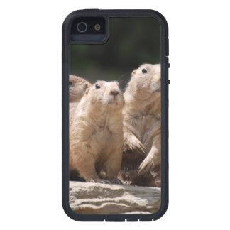 Familia de perro de las praderas iPhone 5 carcasas