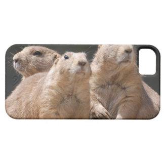 Familia de perro de las praderas iPhone 5 protectores