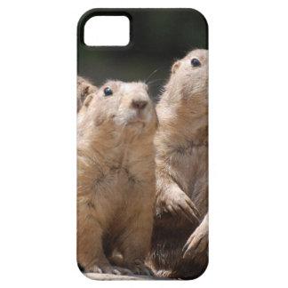 Familia de perro de las praderas iPhone 5 funda