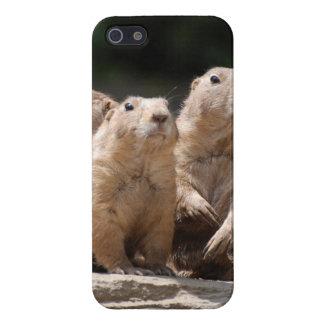 Familia de perro de las praderas iPhone 5 cárcasas