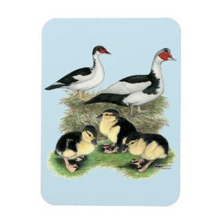 Familia de varios colores negra de Muscovy de los Imanes Rectangulares