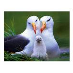 Familia del albatros postal