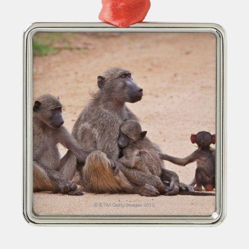 Familia del babuino que se sienta en la tierra adorno navideño cuadrado de metal
