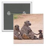 Familia del babuino que se sienta en la tierra pin cuadrado