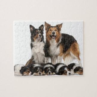 Familia del border collie puzzles