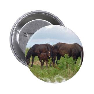 Familia del caballo que pasta alrededor del botón pin
