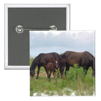 Familia del caballo que pasta el Pin del cuadrado