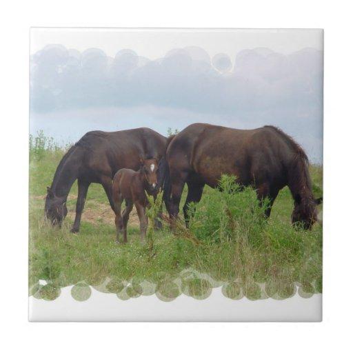 Familia del caballo que pasta la teja