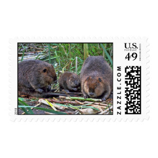 Familia del castor sello