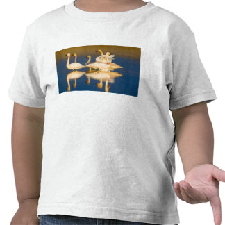 Familia del cisne de trompetista en la luz pasada camisetas