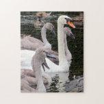 Familia del cisne mudo