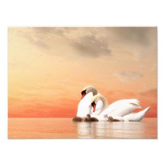 Familia del cisne por puesta del sol cojinete