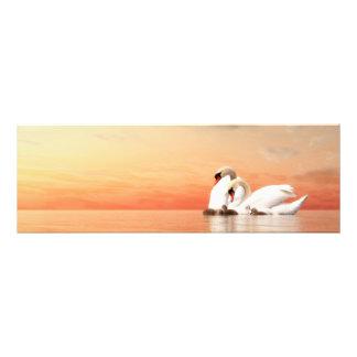 Familia del cisne por puesta del sol fotografía