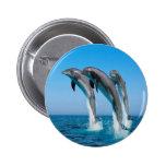 Familia del delfín pin redondo 5 cm