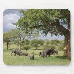 Familia del elefante alfombrilla de raton
