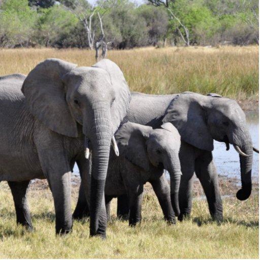 Familia del elefante fotoescultura vertical