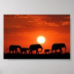 Familia del elefante impresiones