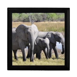 Familia del elefante joyero cuadrado grande