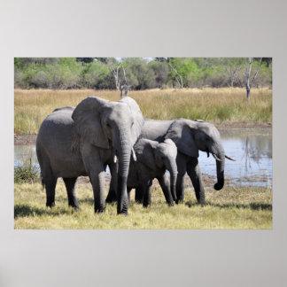 Familia del elefante poster