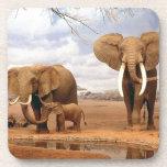 Familia del elefante posavasos de bebidas