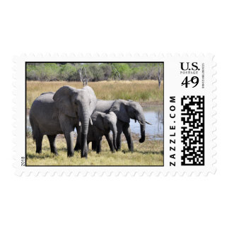 Familia del elefante sello