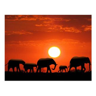 Familia del elefante