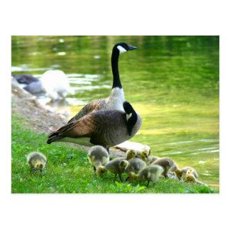 Familia del ganso de Canadá Postal