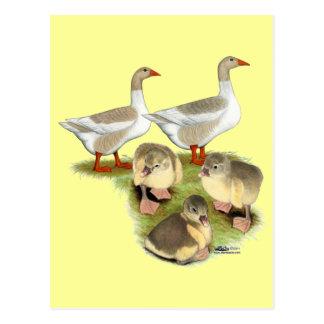 Familia del ganso de Pomeranian Postal